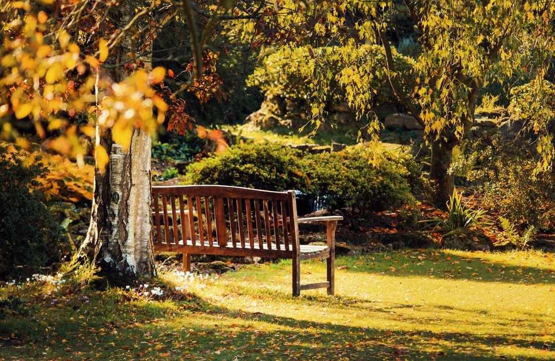 C mo cuidar el jard n en oto o for Inspiraciones contemporaneas para el jardin