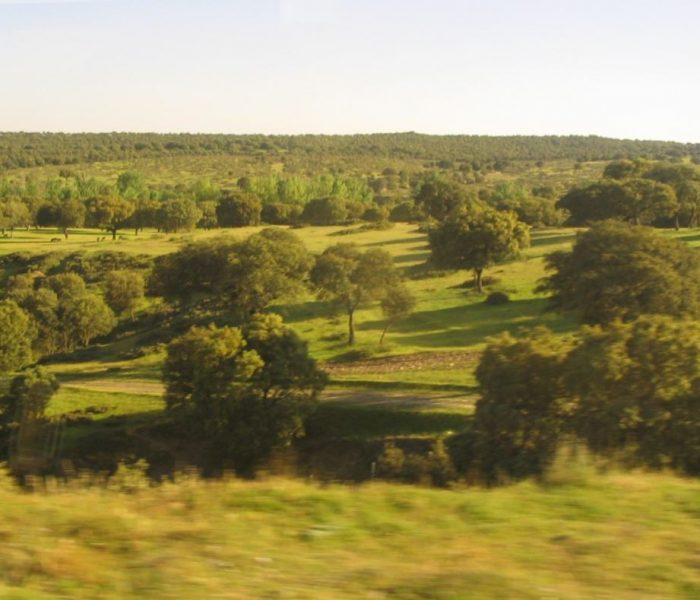 Con vistas al Monte de El Pardo: el paisaje verde de Escalonia en Las Rozas