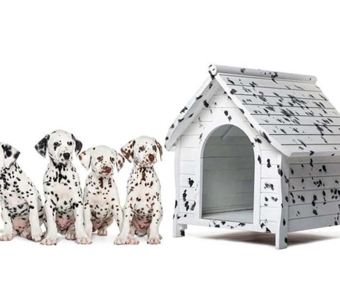 'Casas' para los 'reyes' de cuatro patas: los mejores espacios, también para los perros