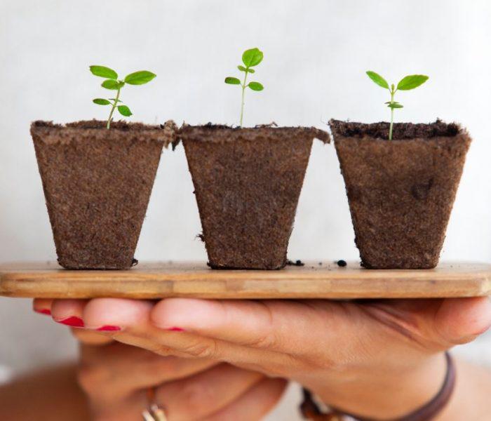 Las mejores plantas (duraderas) para poner en una terraza