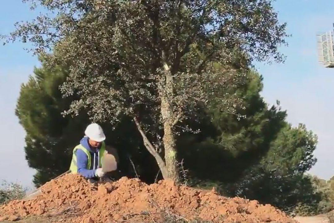 Vídeo – Sin cortar ni un árbol: así hemos creado tu jardín en Piteas (obra nueva en Pozuelo de Alarcón)
