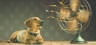 como combatir el calor en casa